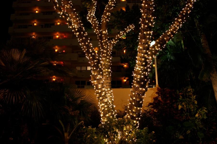Christmas palms, Fort Lauderdale Beach
