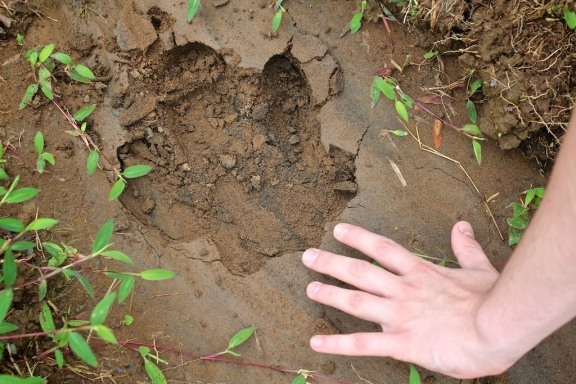 Noah's hand next to a Tapir footprint. Rio Celeste, Costa Rica. © Michel Botman Photography, 2013.